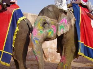 India elephant1